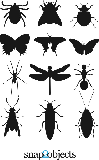 insects cs4